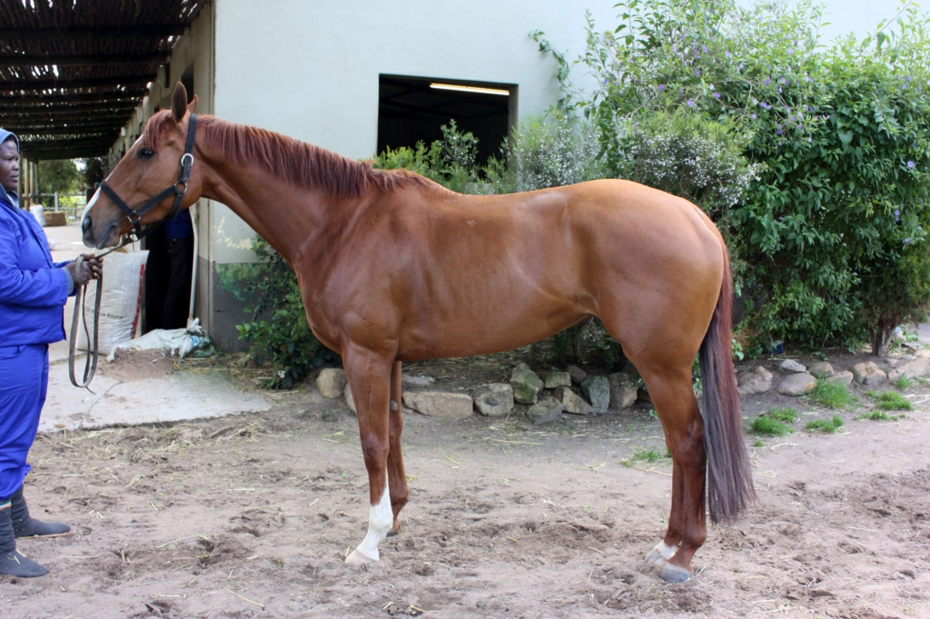 Racehorse after 2 treatments