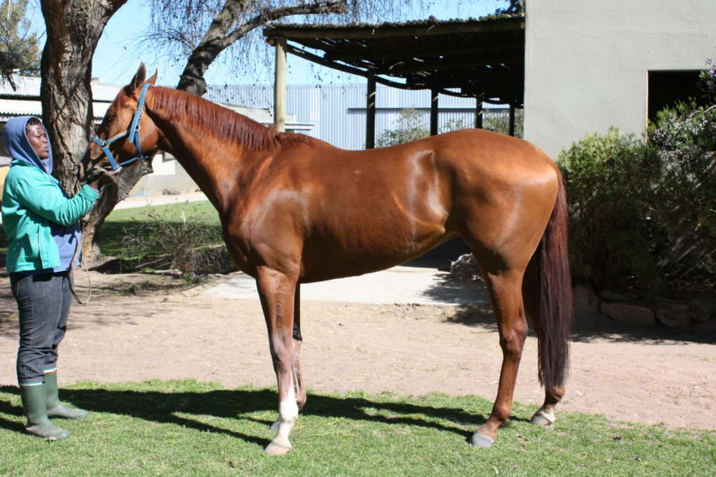 Racehorse South Africa