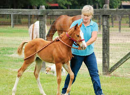 tips_foal1