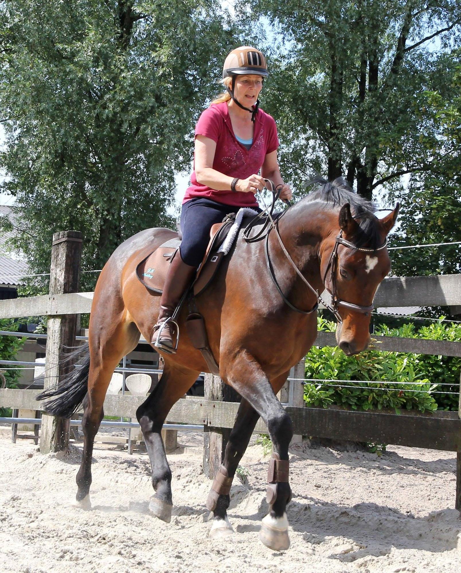 therapie met paarden