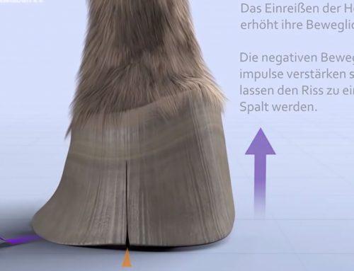 Hoe ontstaan scheuren in de hoefwand?