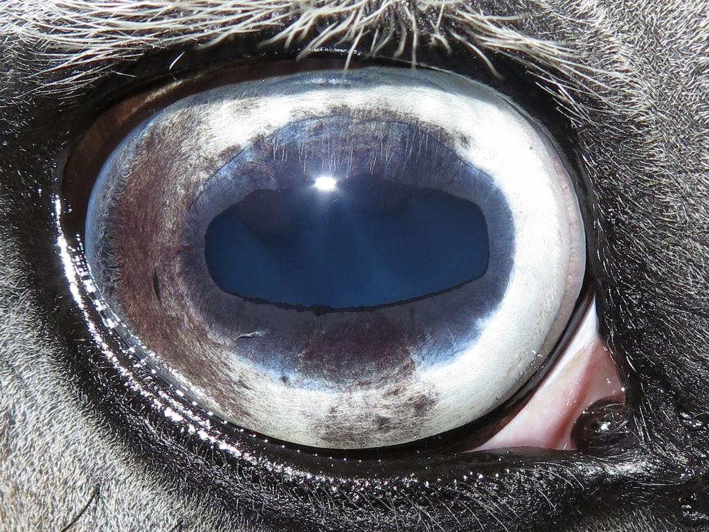 Rechter oog