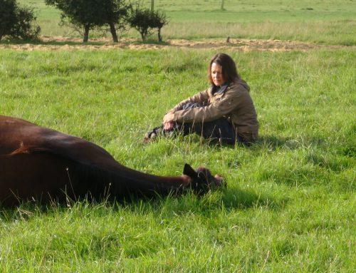 Uit liefde voor de Paarden, door Joey Philips